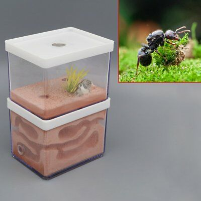 New Ant Nest Farm Landscaping Housing For Ant Colony Science Nature Education