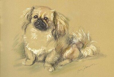Pekingese Dog Drawing by Lucy Dawson  1930's - LARGE New Blank Note Cards