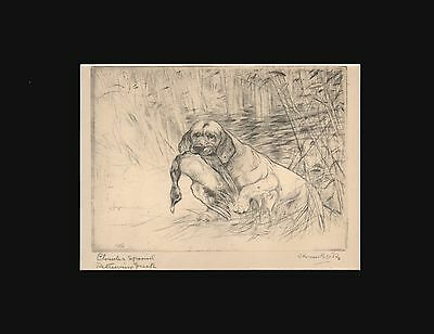 Clumber Spaniel Dog by Vernon Stokes 1930 Dry Point Matted 9X12 Print
