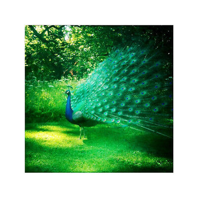 5D Diamond Embroidery Painting DIY Peacock Art Stitch Craft Kit Wall Decor