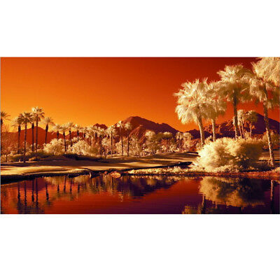 Oil Painting Canvas Home Wall Decor Art Modern Picture Unframed Scenery Flowers