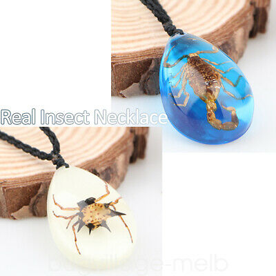 Real Scorpion Necklace Men's & Women's Pendant Insect Animal Amber Cool 3D Gift