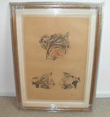 1865 Mintern Book Print of Viner Ellis Dissection by G H Ford (Very Large Print)