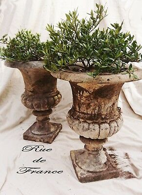Vintage  Cast Stone Garden Urns Pots  With Planted Gardenia