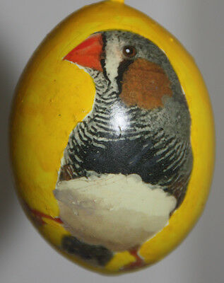 gourd Easter egg or Christmas ornament with zebra finch