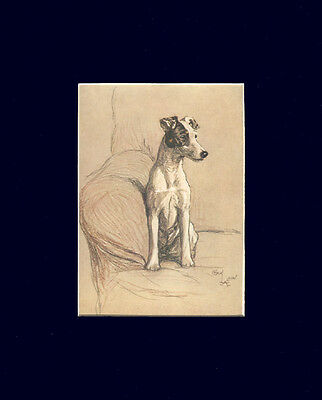 Fox Terrier Dog Cecil Aldin NICE 1928 print Matted 8 X 10