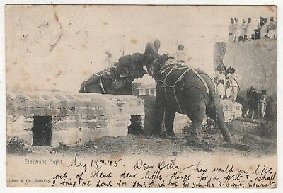 Printed Photo Postcard - Elephant Fight - From E Larter 13 Hussars, India 1905