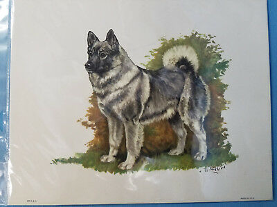 Norwegian Elkhound Dog Lithograph Art Print Picture by Ole Larsen 1950's