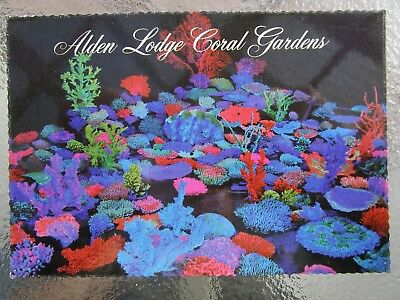 Postcard Coral Gardens & Sea Shell Museum Alden Lodge Geelong   - Postage $1.50