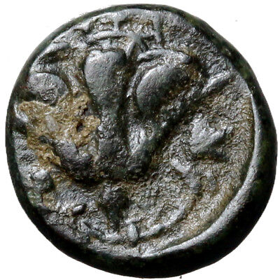 Greek coin Rhodes AE11. ca 394-304 BC. P-O either side of rose, Σ to left / rose