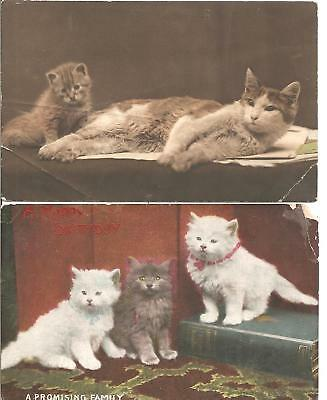 Rare Lovely Old Vintage Pair Of Two Greetings Postcard  Of,cat,kitten,1908