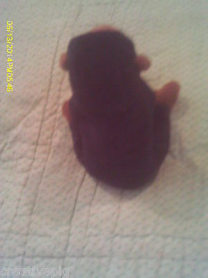 Ty Beanie Babies Chimp with Tag