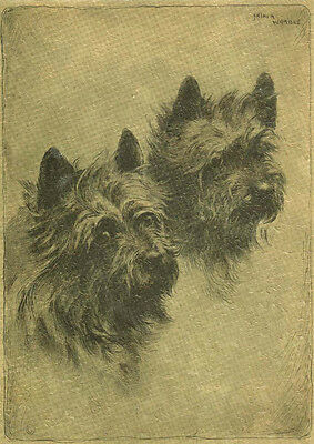 Cairn Terrier Dog Portrait by Arthur Wardle 1920's ~ LARGE New Blank Note Cards