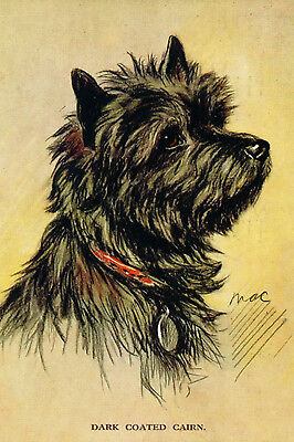 Cairn Terrier Dog  Dark Coated 1940 by Lucy Dawson  LARGE New Blank Note Cards