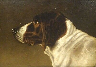 Fine 19th Century English Hound Dog Head Portrait Antique Oil Painting