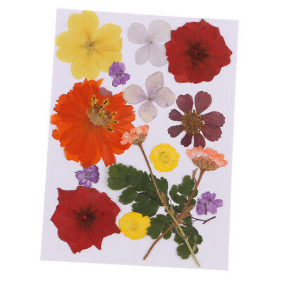 Assorted Pressed Dried Flower Embellishment DIY Resin Pendant Jewelry Crafts