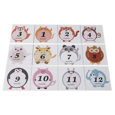 Boy or Girl Monthly Baby Belly Stickers - Gender Neutral - Shower Gift CS