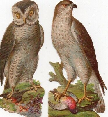 1800's Victorian - Owl & Hawk  Diecut Lot - Selling Lot Of Scrap Cards