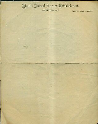 1903 Ward's Natural Science Establishment Letter Stationery - Rochester,NY
