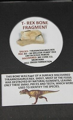 T-Rex Dinosaur Bone Fragment in Display