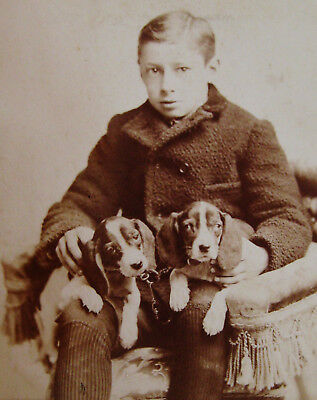 Cabinet Photo Handsome Boy With 2 Adorable Beagle Puppy Dogs Too Cute! Camden Nj