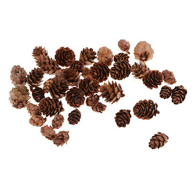 50pcs Assorted Size Decorative Pine Cones Pinecone for Florists Crafts Decor
