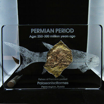 Paleontology souvenir: fish paleonisc from permian age in frame