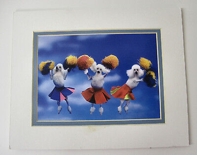 Poodles Print Cheer Leading Grooming Shop Art Pom Poms Colorful Collectable