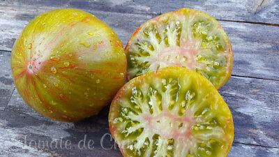 10 graines de tomate magnifique rare Summer of Love heirloom tomato seeds bio