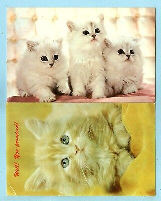 """2 Kittens, """"Well! You Promised! & The Three MusCATeers"""", 3 White Kittens, Yellow"""