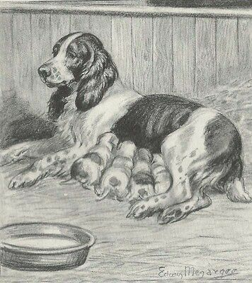 English Springer Spaniel Dog & Pups 1940's Megargee  LARGE New Blank Note Cards