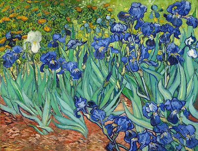 Vincent Van Gogh Oil painting on canvas wall decor Irises ( 1889 ) 28x28""