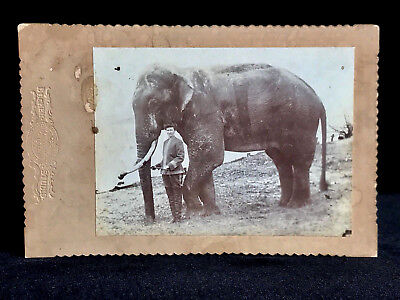 Rare Circus Photo - Elephant Trainer Mary York With Jumbo Ii Posed Against Tent