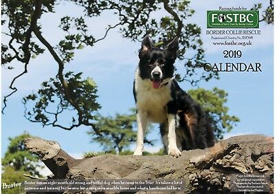 2019 Calendar for FOSTBC Border Collie Dog Rescue Charity
