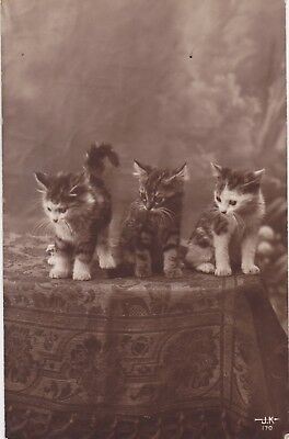 Carte photo montage card cat catze gato 猫 chat chatons