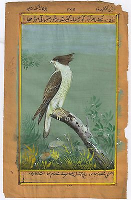 Wild Life Original Eagle Miniature Watercolor Paper Painting Indian Hand Painted