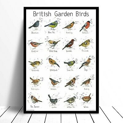 Large A3 British Garden Bird Poster Chart Nature Wildlife Art Print Animal Gift