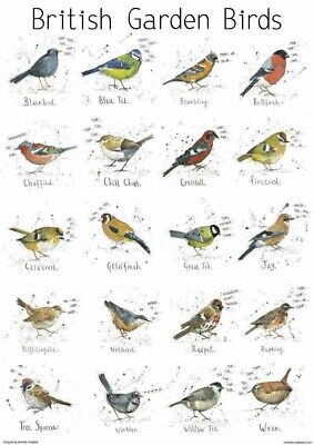 A4 British Garden Birds Poster Print Nature Wildlife Chart Art Print Animal Gift