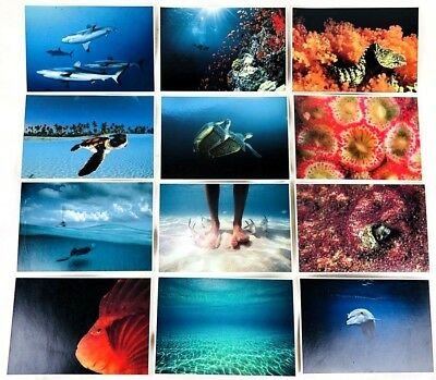 "Lot of 7.5""x5"" Aquatic Collectible Postcards Fish Water Dolphin Sea Life Ocean"