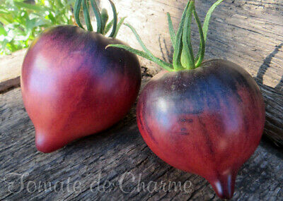 10 graines de tomate rare Sgt Pepper's attrayante antho heirloom tomato seeds