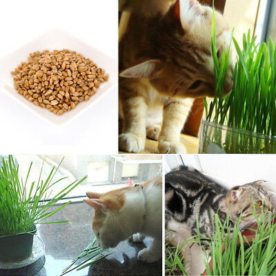 150g Fresh Organic Oat Seeds Cat Grass Seeds Pets Kitty Snack Food Aid Digestion
