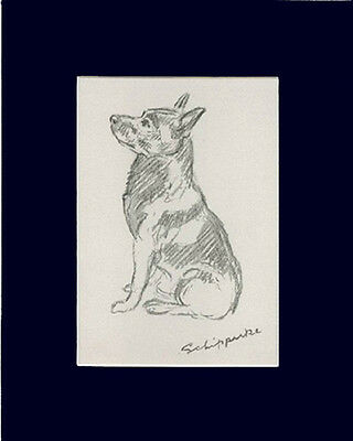 "Schipperke Dog Sketch by Lucy Dawson 1940  8X10"" Matted Print"