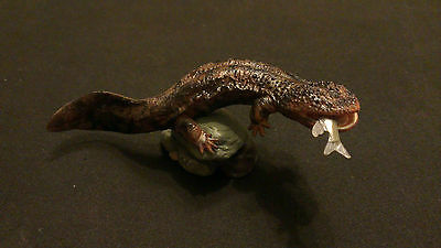 RARE Kaiyodo Natural Monuments Japanese Giant Salamander Figure
