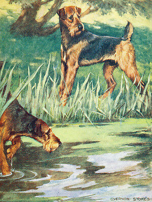 Airedale Terrier  Dogs by Vernon Stokes 1906 ~ New  Large Note Cards