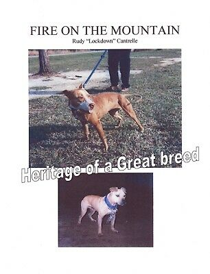 Rare Pit Bull Book Fire On The Mountain By Rudy Lockdown Cantrelle Very Scarce