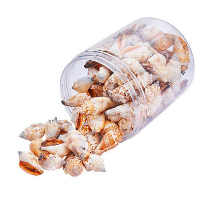 1 Box Conch Shell Craft Charms for Fish Tank Vase Filler Home Decors Party