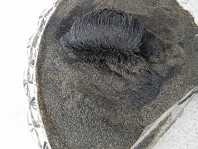 SPECIAL 4 Ounces Genuine Black Magnetic Sand Pacific Ocean Beach