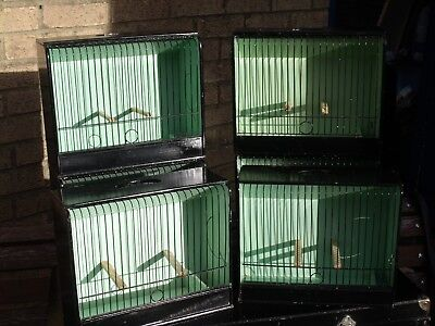 Gloster  Canaries   Show   Cages