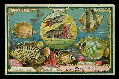 1880's York,PA-C.D. Richey, D.D.S.(Registered Dentist) Tropical Fish Trade Card