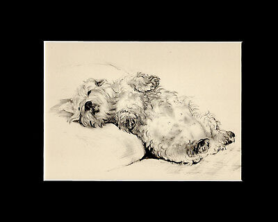 Sealyham Puppy Dog SNOOZING Print 1937 by Vere Temple 8 X 10 Matted Cute!